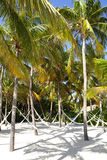 Hammocks streched between palm trees on a beach Stock Photos