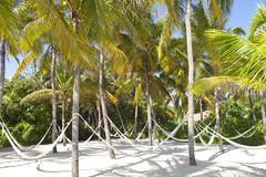 Hammocks streched between palm trees on a beach Royalty Free Stock Images