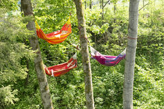 Hammocks between trees. Three colorful hammocks hanging between trees Royalty Free Stock Photography