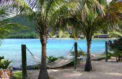 Hammocks under palm trees Stock Image