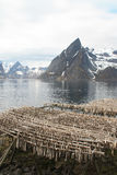 Hamnoy's mountains  and stockfish Stock Photography