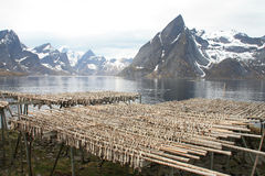 Hamnoy's mountains  and stockfish Stock Images