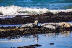 Hamnskyddsremsor på Fitzgerald Marine Preserve, Moss Beach, Kalifornien arkivfoto