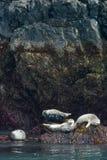 Hamnskyddsremsor på Rocks Royaltyfri Foto