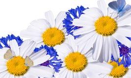 ?hamomil y cornflowers. Imagen de archivo
