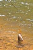 Hampala barb hook Metallic Fishing Lure Stock Photo