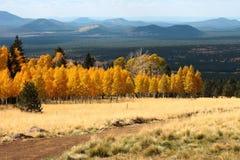 hampe de drapeaux d'automne de couleur des 6 Arizona photos libres de droits