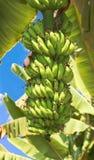 Hampi的香蕉种植园,印度 库存图片