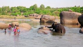 HAMPI, ИНДИЯ - АПРЕЛЬ 2013: Люди и слон на реке сток-видео