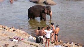 HAMPI, ИНДИЯ - АПРЕЛЬ 2013: Люди и слон wading в реке видеоматериал