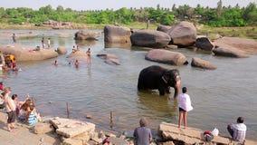 HAMPI, ИНДИЯ - АПРЕЛЬ 2013: Люди и слон wading в реке сток-видео