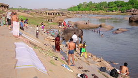 HAMPI, ИНДИЯ - АПРЕЛЬ 2013: Слон идя в реку акции видеоматериалы