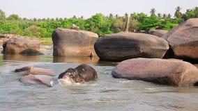 HAMPI INDIA, KWIECIEŃ, - 2013: Słonia kąpanie w rzece zbiory wideo