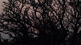 Tree at sunset in India. Hampi Karnataka India march 25 2019: Sunset point Hemakuta tree stock video