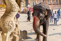 Hampi Karnataka, Indien - 1 14 2017; Den Hampi tempelelefanten är bl royaltyfria foton