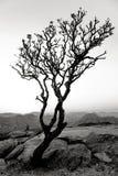 Hampi, la India En blanco y negro foto de archivo