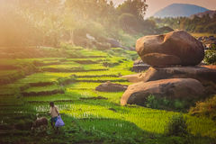 Hampi ricefields Royalty Free Stock Images