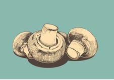Hampions retro illustration Stock Photo