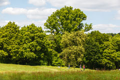Hampstead Heath. The well known and popular Hampstead Heath in London, England. People flock to this park especially on a sunny day to enjoy the green trees and stock photos