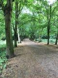 Hampstead wrzosowiska park Obraz Royalty Free