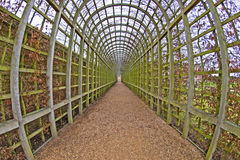 Hampton Court Palace. The vine walkway at Hampton Court Palace in Winter. This was first established in 1768 by the celebrated gardener 'Capability' Brown Stock Images