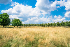 Hampton Court Park in South London, UK Royalty Free Stock Image