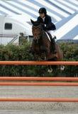 Hampton-klassisches Pferden-Erscheinen stockfoto