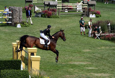 Hampton-klassisches Pferden-Erscheinen lizenzfreie stockbilder