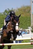 Hampton-klassisches Pferden-Erscheinen Lizenzfreies Stockbild
