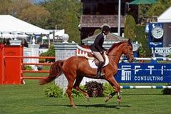 Hampton-klassisches Pferden-Erscheinen Lizenzfreie Stockfotos