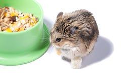 Hamster Stock Image
