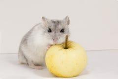 Hamster Stockbilder