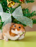 Hamster. Funny hamster under the cristmas tree Stock Images