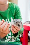Hamster. In children small hands Royalty Free Stock Photo