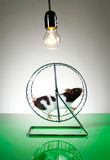 Hamster Royalty-vrije Stock Fotografie