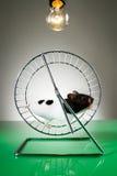 Hamster Royalty-vrije Stock Afbeelding