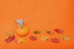 Hamster achter Pompoen Stock Fotografie
