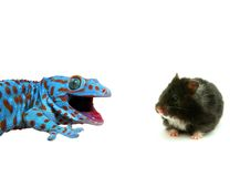Hamster And Lizard Royalty Free Stock Photography