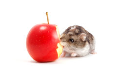 Hamster and apple Stock Photos