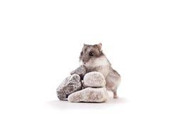 Hamster auf einem Felsen Stockbild
