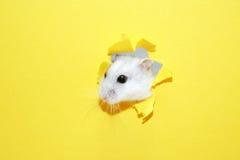 Hamster-Auftritt Stockfotografie