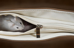 Hamster in a bag Stock Photography