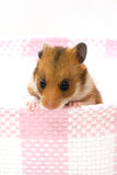 Hamster in a basket Stock Image