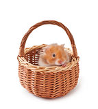 Hamster in a basket  Stock Photography