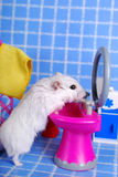 Hamster in the bathroom Stock Images