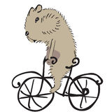 Hamster on a bike Royalty Free Stock Photography