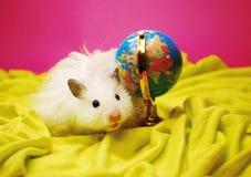 Hamster blanc avec le globe. Image libre de droits