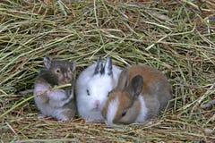 Hamster bonito e dois coelhos do bebê junto no feno imagens de stock royalty free
