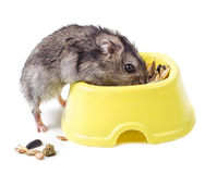 Hamster with bowl Stock Images