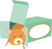 Hamster in a box. Happy hamster in a green box. There may be food or maybe his toy. There is a place for a name or logo Royalty Free Stock Photo